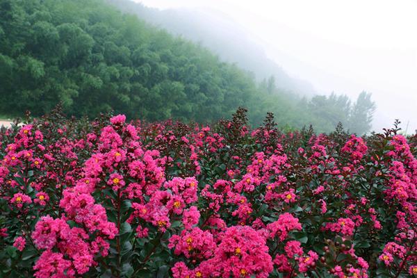 """三门峡豫西百草园""""五彩花坡""""花浪似海唯美壮观!"""