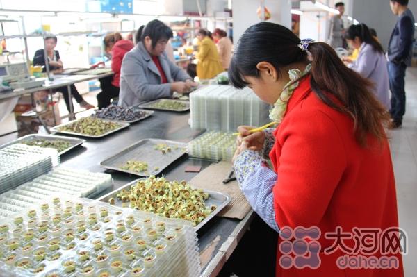 据该公司负责人李金涛介绍,公司现有从业人380余人,辐射周近20多个村,其中贫困户20多人,固定职工每月收入2000元左右。