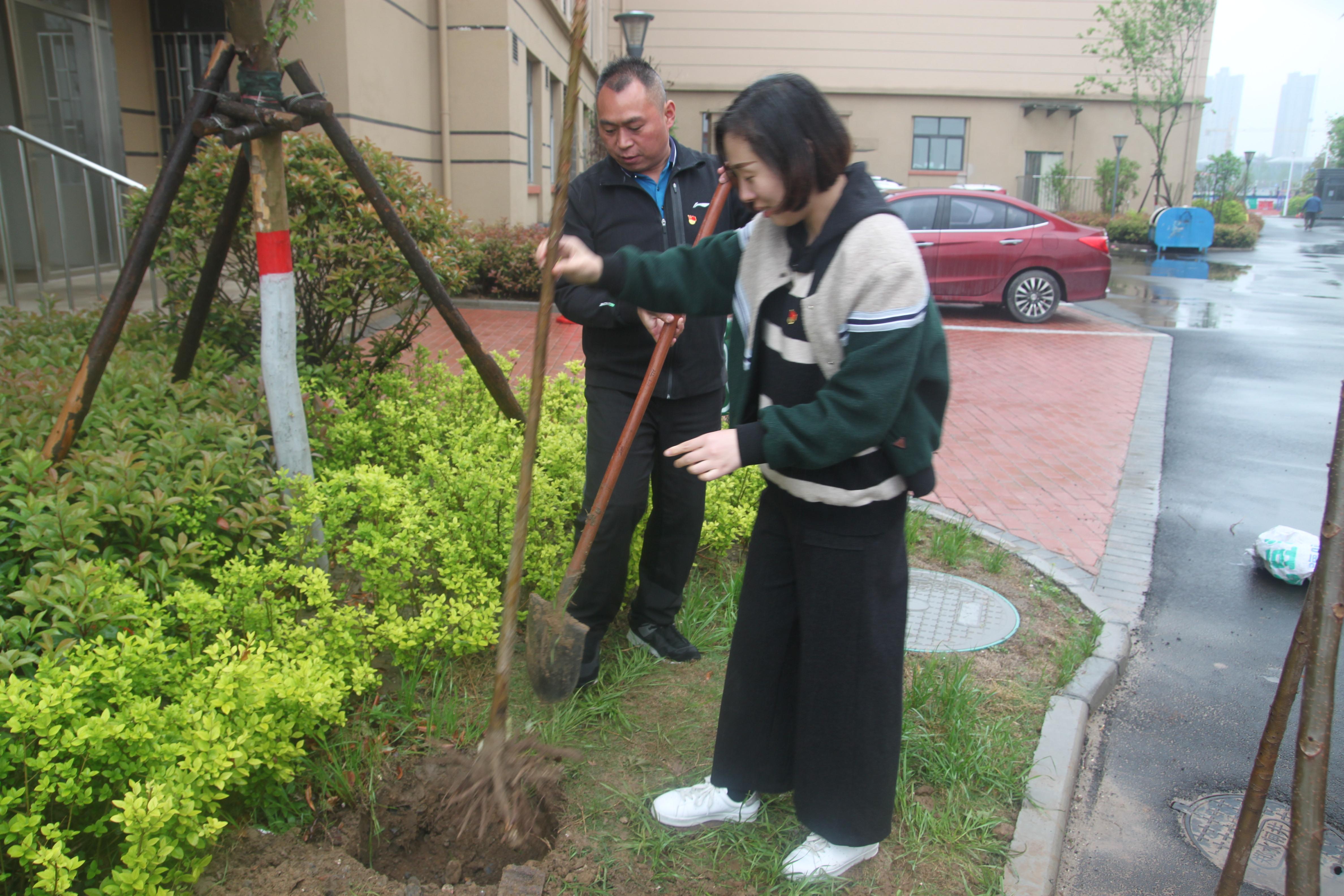 1   挖坑 放苗