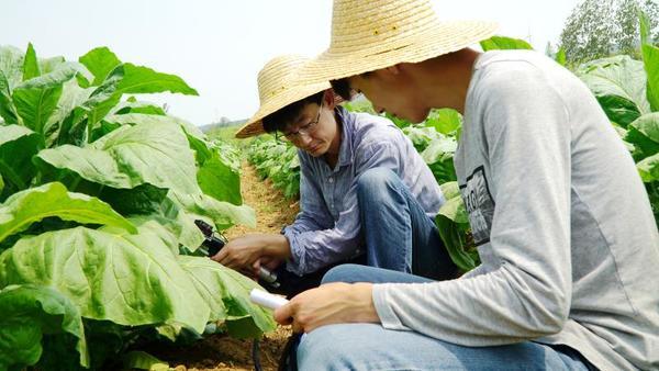 北京赛车PK10计划:平顶山市烟草公司建技术中心请博士?助力烟农增收