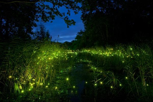 萤火虫湖畔