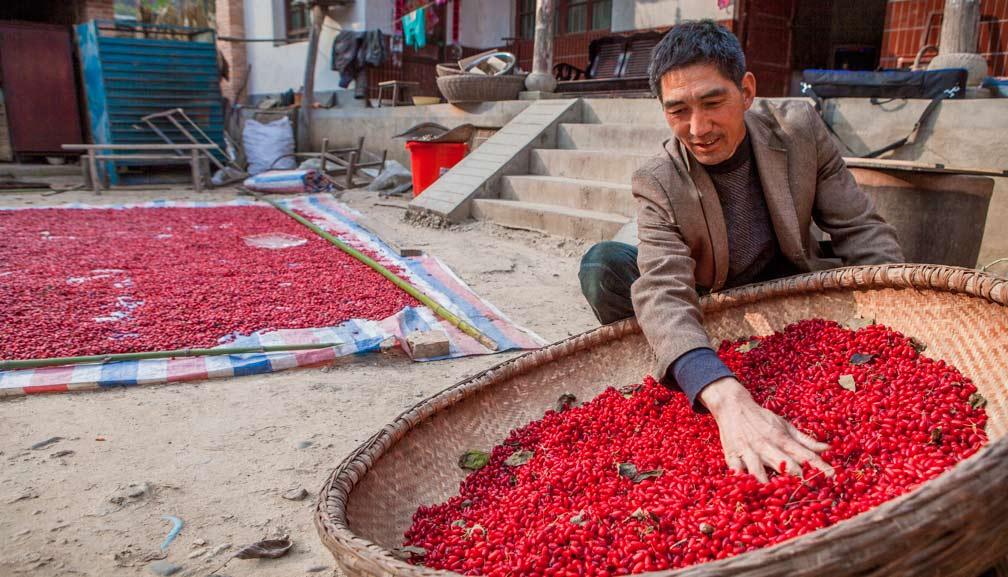 村民在整理晾晒采摘的山茱萸2
