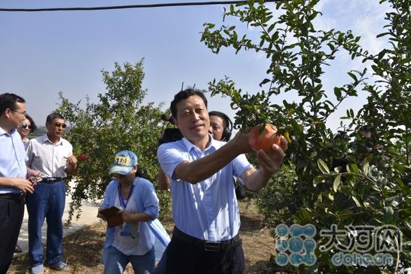 县委书记杨英锋为果园开剪