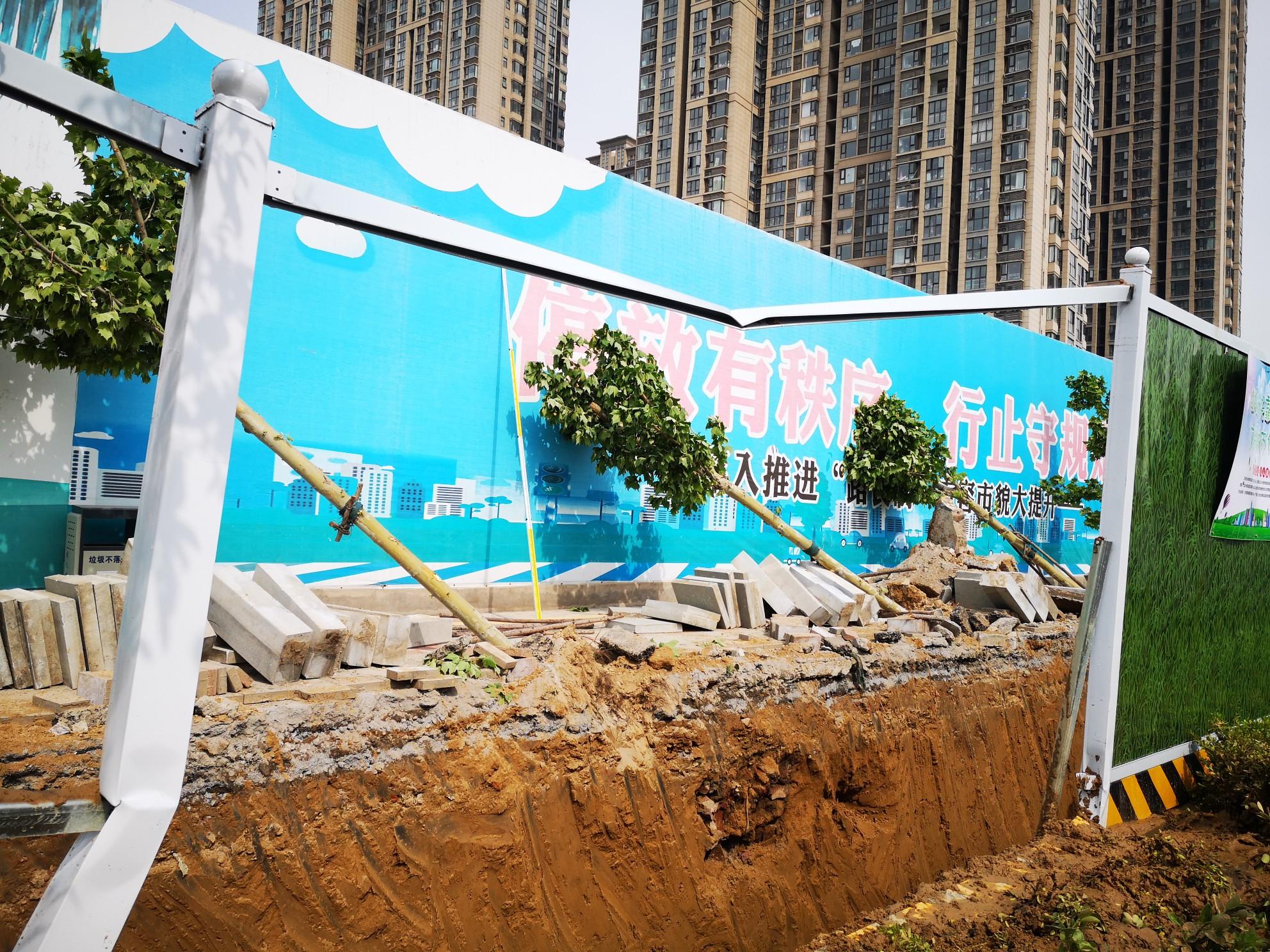 河南信阳挖掘机_郑州路边施工挖沟,行道树被毁坏 - 河南一百度
