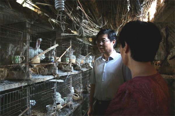 陈松林察看长毛兔养殖情况。