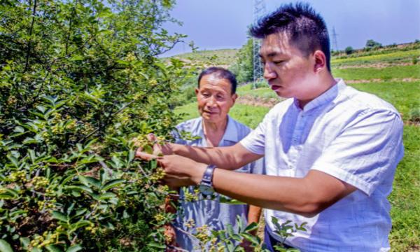 合作社负责人张博为贫困户马继张讲解老品种花椒管理技术AJ8J1165_meitu_26