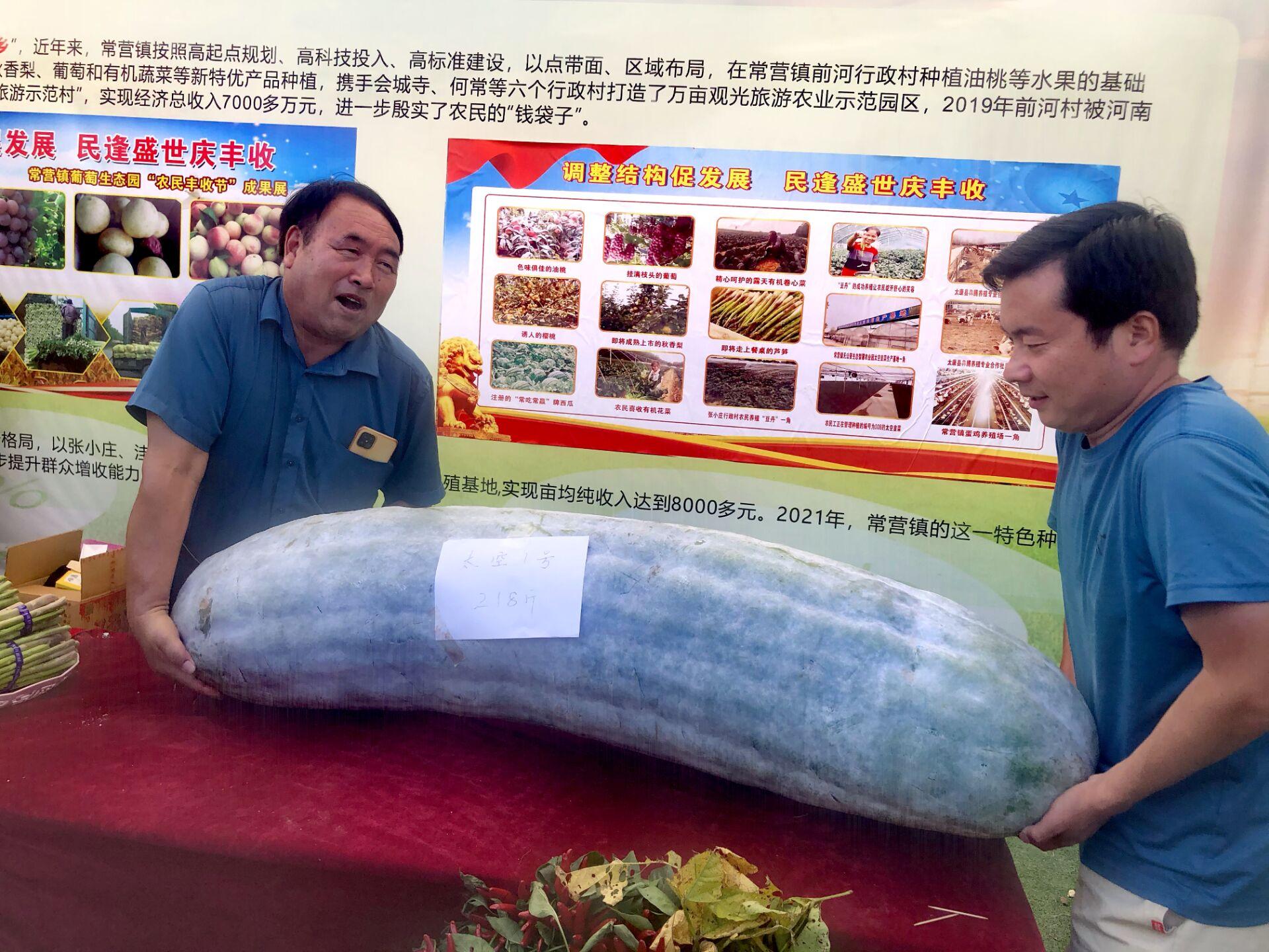 周口丰收节丨这个冬瓜有点沉,218斤,来自太空育种