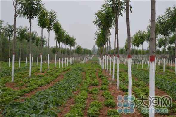 008后期管护-林下种植(1)