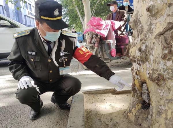 『蜜蜂』郑州闹市街头树洞里,突然搬来一群不速之客