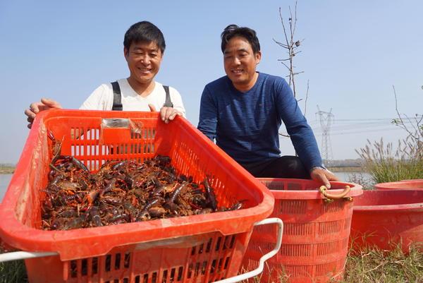 """正阳淮河虾,爬上""""公社""""餐桌……"""