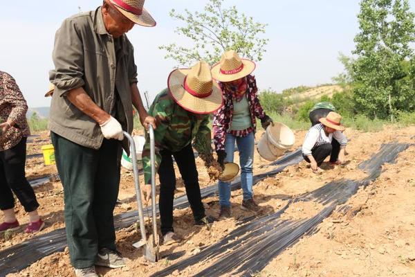三门峡交口乡:特色种植拓宽产业扶贫路