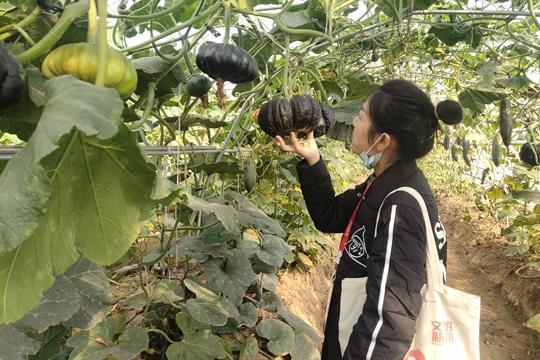 《【摩登4在线平台】新郑市新村镇:种业科技发展为乡村振兴加码助力》