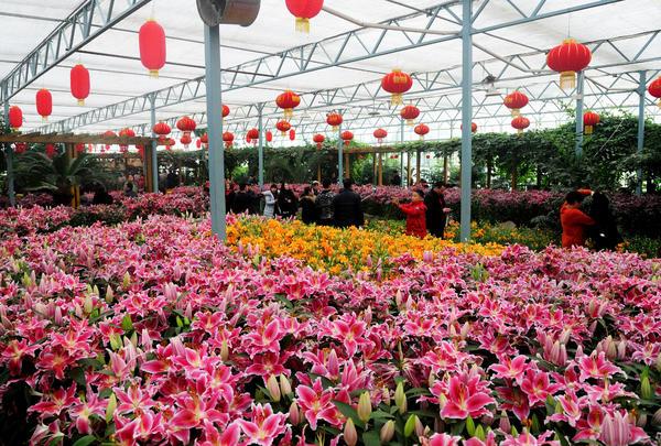 买彩票的正规网站:郑州绿博园中原大庙会2月16日将惊艳登场